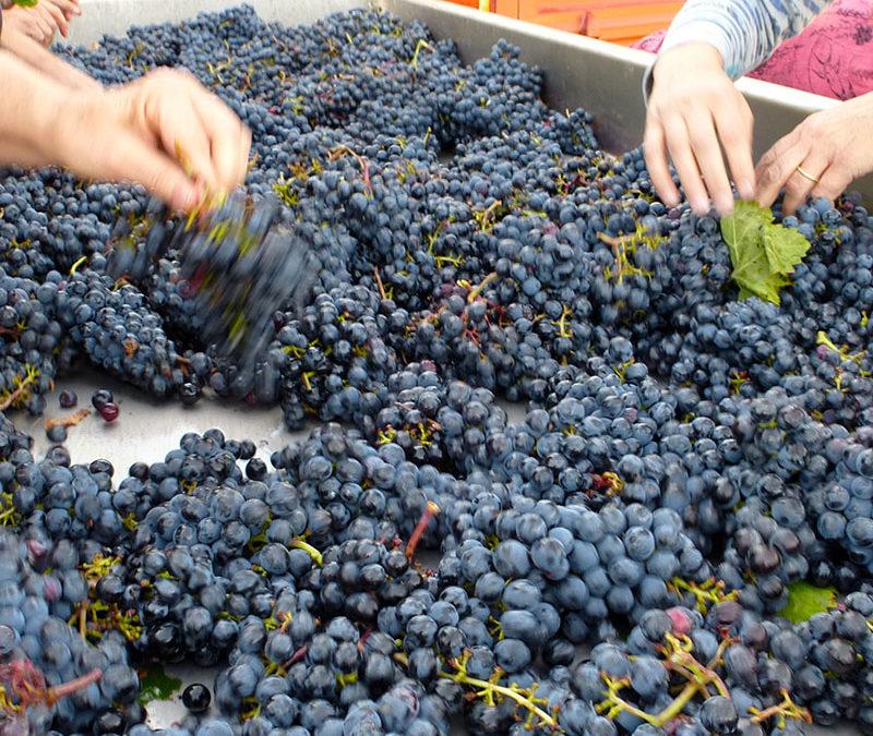 Harvest 2016 News