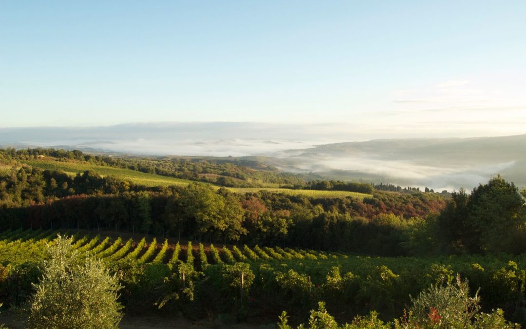MONTALCINO – Unique in the Wine World