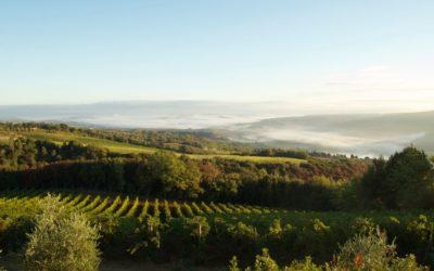 MONTALCINO – Unique in the Wine World